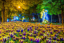 Tulips Bloom In The Night Park In The Flower Beds. View Of The Beautiful Night Park And The Lanterns On The Alleys.