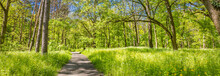 Beautiful Woods View In Mountains During Summer. Trail, Footpath Under Sunny Green Forest Trees, Leaves, Freedom, Adventure Hiking Nature Landscape. Peaceful Panoramic Landscape, Idyllic Nature Banner
