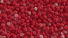 Beautiful Flowers Arranged To Create A Vibrant Wall. Pink, Colorful Background Formed From Romantic Carnations. 3D Render