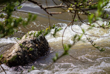 Strong River Current, Splash Of Water, Waves And Large Stones.
