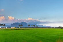 Scenic View Of Paddy Field