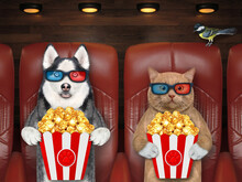 A Reddish Cat And A Dog Husky In 3d Glasses Are Eating Popcorn And Watching Film. White Background. Isolated.