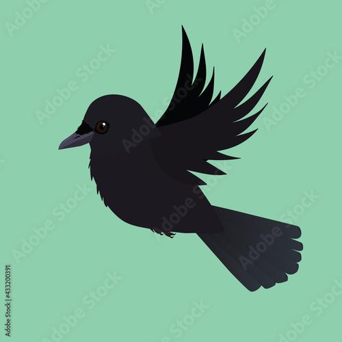 Naklejka premium valkjevliegbird, animal, crow, black, nature, wildlife, isolated, beak, pigeon, blackbird, white, wild, raven, birds, silhouette, feather, illustration, dove, feathers, rook, grass