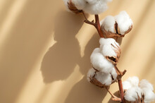 Branch With White Cotton Flowers With Sun Shadows On Beige Background Flat Lay. Delicate Light Beauty Cotton Background. Natural Organic Fiber, Agriculture, Cotton Seeds, Raw Materials For Fabric