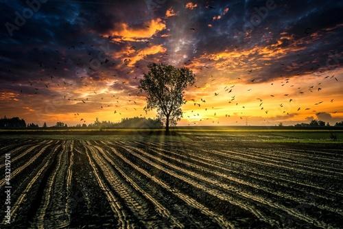 Fototapeta samotne drzewo w polu z promieniami słońca na tle dramatycznych chmur obraz