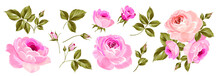 Set Of Differents Roses On White Background.