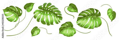 Valokuvatapetti Set of different leaves monstera on white background.