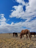 Herd of horses bay chestnut palomino mare stallion and Foals on Spring meadow