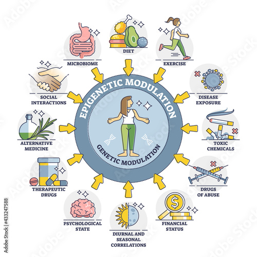 Fototapeta Epigenetic modulation as environmental effect to phenotype outline diagram. External influence and mediator process elements in labeled educational cycle scheme vector illustration. DNA regulation. obraz