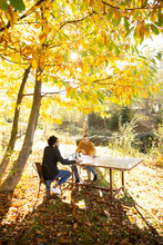 Businessmen Working At Table In Sunny Idyllic Autumn Park