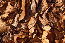 Leaves Don't Live Anymore, Creating An Infinite Blanket Over The Soil Of The Forest.