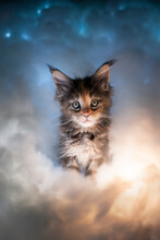 Cute Calico Maine Coon Kitten Portrait Illuminated By Colorful Clouds