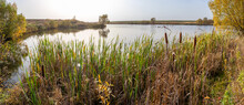 Panorama Of A Lake With Reeds On Its Bank