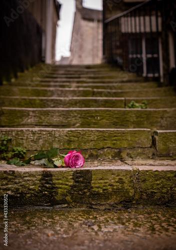 Obraz na plátně Rose on the steps in alleyway