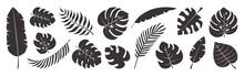 Tropical Leaves Vector Set, Black Palm Leaf Doodle Design Isolated On White Background. Nature Exotic Illustration
