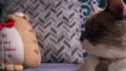 Fotografie, Obraz Perfil de gato