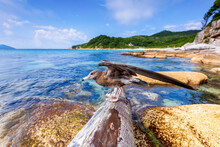 Beautiful Summer Landscape With Furugelm Island. A Young Seagull Stands On A Log, Melting Its Wings, Against The Background Of The Blue Sea.