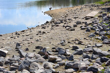 Increasingly Wide Rocky Shoreline Of Receding Colorado Lake In Drought With Canada Goose On Edge Of Water