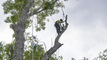 Tree Removal Trimming Pruning Maintenance Service Tree