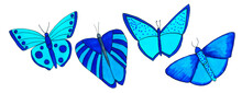 Set Of Beautiful Exotic Butterflies With Colorful Wings
