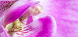 Leinwandbild Motiv Purple orchid phalaenopsis flower fragment. Macro. Floral background