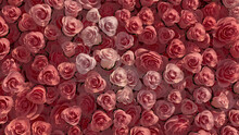 Romantic, Pink Flower Blooms Arranged In The Shape Of A Wall. Colorful, Vibrant, Roses Composed To Create A Beautiful Floral Background. 3D Render