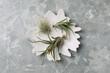 Leinwandbild Motiv Different tillandsia plants on light grey marble table, top view. House decor