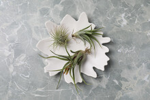 Different Tillandsia Plants On Light Grey Marble Table, Top View. House Decor