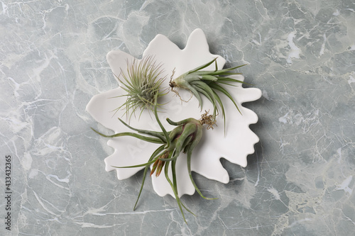 Different tillandsia plants on light grey marble table, top view. House decor - fototapety na wymiar