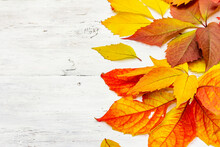 Colorful Fall Leaves On White Wooden Boards