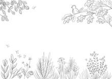 Herbal Sketch With Cute Bird Drawing