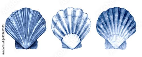 Valokuva Seashell set watercolor illustration