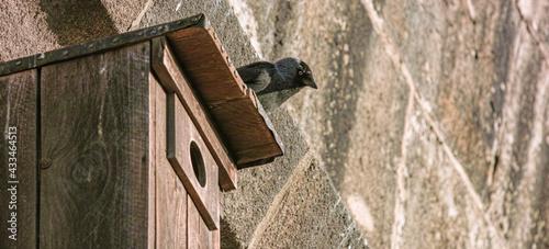 Fotografie, Obraz Unearthly look of a jackdaw bird