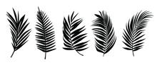 Beautiful Palm Tree Leaf Set Silhouette Background Vector Illustration