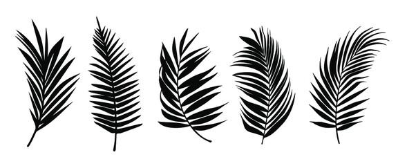 Beautiful palm tree leaf set silhouette background vector illustration