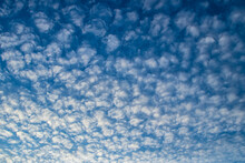 Beautiful Summer Sky Background With Altocumulus Clouds That Look Like Cotton Pads With Copy Space