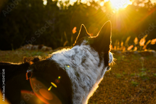 Foto Logue Brook Dam, Lake Brockman, border collie dog, australia