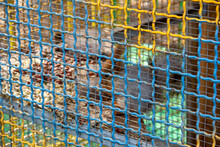 Fluffy Little Squirrel In A Cage, Animal Protection, Animals In Captivity,