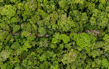 Aerial Panorama, A Large Panorama Of A Small Stream Running Through The Canopy From A Tropical Forest Or The Amazon Rainforest