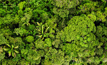 Aerial Panorama, A Large Panorama Of The Tree Canopy Of A Tropical Forest Or The Amazon Rainforest