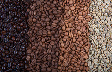 Coffee Beans Are Double Roasted. Coffee Papers Showing Various Roasting Stages From Green Beans To Italian Roast.