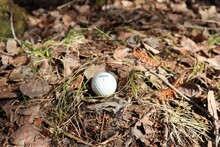 Close-up Of A Golf Ball Lies On The Ground In The Forest
