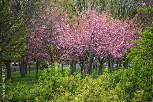 Kwitnące drzewa - fototapety na wymiar