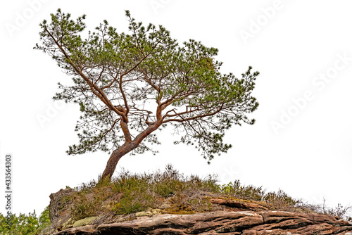 Photo A crippled pine stands on the top of a mountain