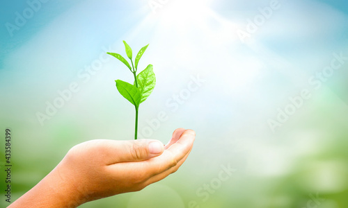 Canvastavla World environment day concept: hands holding  plant over green background