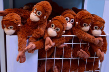 Stuffed Monkeys Are Eagerly Awaiting Their Buyer. They Are Clamped In The Basket, They Want To Play In The Wild.