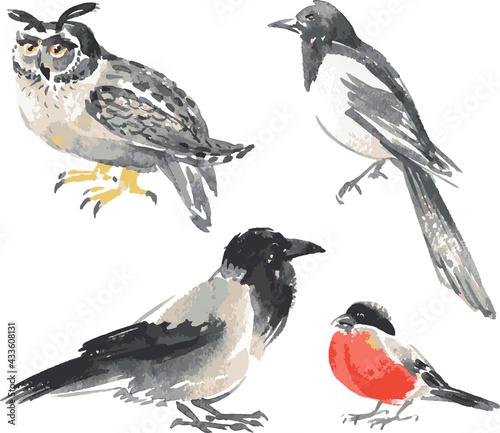 Naklejka premium Vector image of watercolor sketches various wild birds
