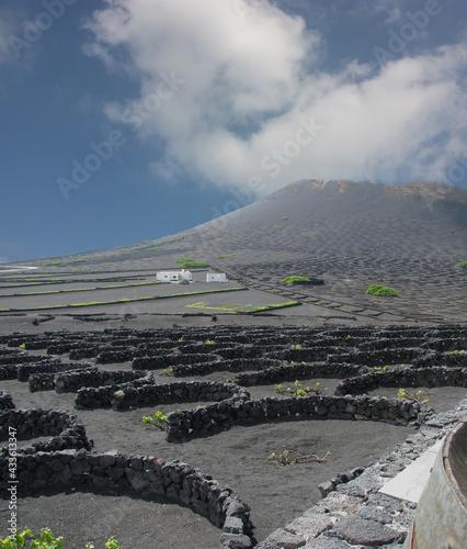 Volcan et vignes de l'île de lanzarote aux Canaries #433613347