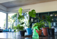 Close Up Of Plants In Pots On Table In Kitchen