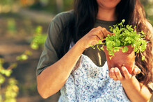 Closeup Of A Beautiful Female Gardener Carrying A Pot With New Plant. A Young Woman Gardening In The Garden With New Microgreens.
